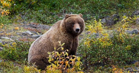 Join our gay bears group as we sail the majestic Inside Passage of Alaska on the refurbished Emerald