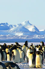 Antarctica & South Georgia Deluxe Gay Air-Cruise