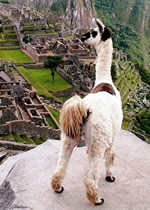 Machu Picchu, Peru Luxury Gay Tour