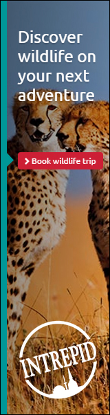 Discover Wildlife with Intrepid Travel