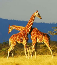 Kenya African Gay Safari Tour