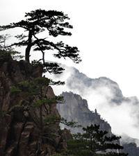 Huangshan Mountain Gay Tour