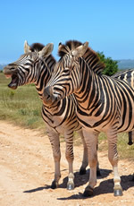 South Africa Gay Safari Tour