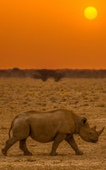 Namibia Gay Safari Tour