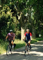 Gay Biking Tour in Provence France