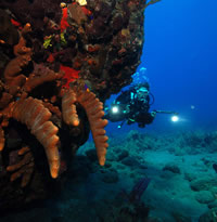 Saba, Caribbean Gay Scuba Diving Tour