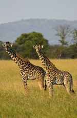 Tanzania Gay Safari Tour
