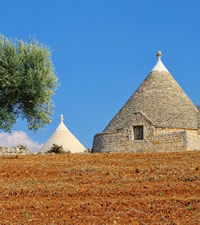Puglia Olive Oil Harvest Gay Tour
