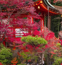 Japan fall foliage gay tour