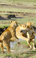 Kenya luxury gay safari tour