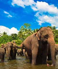 Sri Lanka Gay Adventure Tour