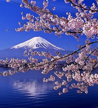 Japan Cherry Blossom Gay Tour