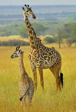 Gay Tanzania Safari Tour