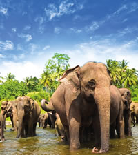 Sri Lanka (Ceylon) Gay Group Tour