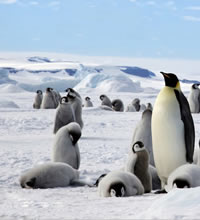 Antarctica Gay Adventure Luxury Cruise 2020