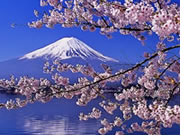 Japan Cherry Blossom Gay Group Tour